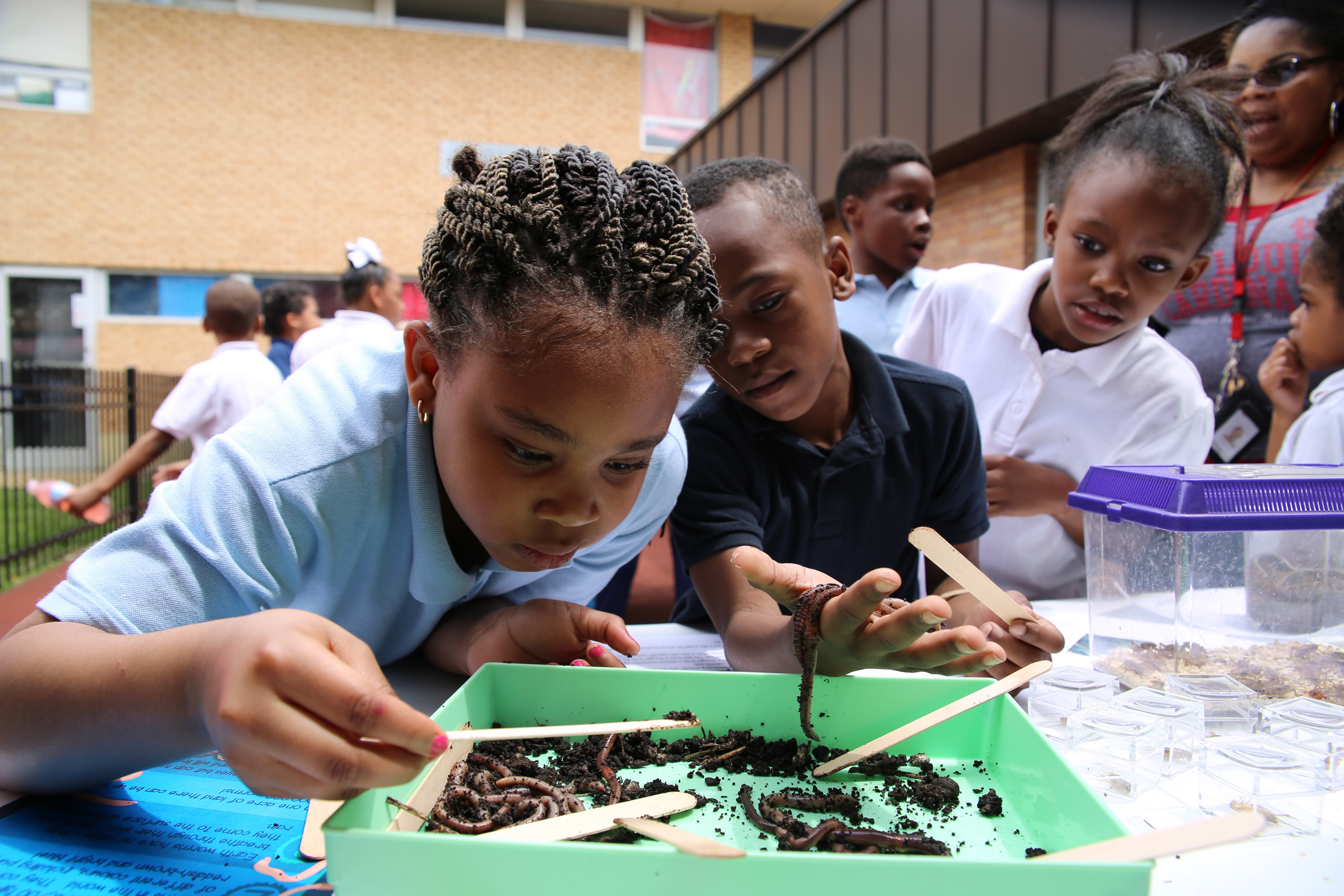 Two African American elementary school students examine earthworms while other students watch